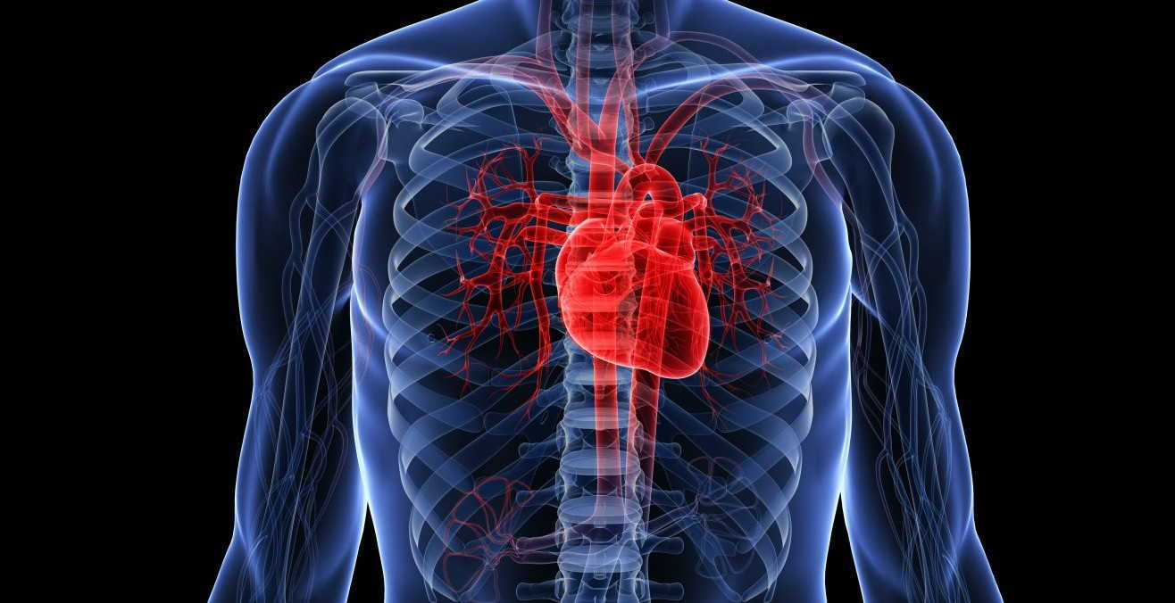 Claves para mejorar la salud cardiovascular