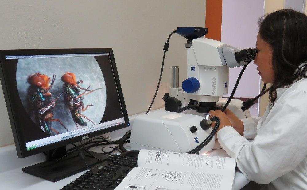 La investigación como parte de las funciones sustantivas de la Universidad de La Sierra Juárez