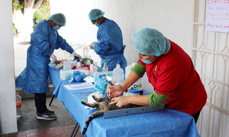 Jornadas de esterilización del Gobierno capitalino atienden a más de 600 mascotas