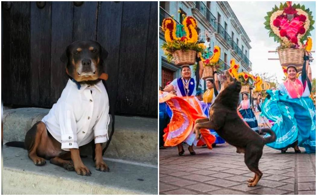 Mazapán no bailará en los convites de la Guelaguetza, ni en ¡Ningún otro evento!