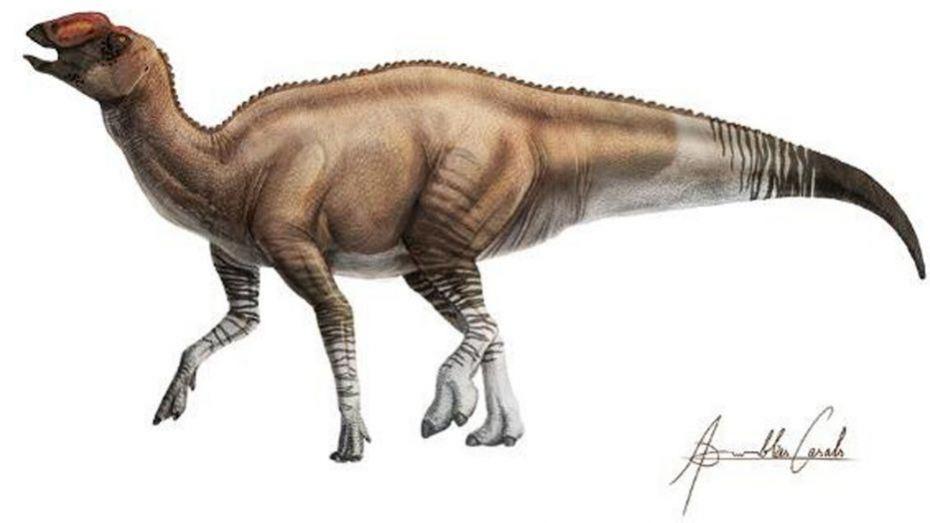 Descubren nueva especie de dinosaurio con pico de pato