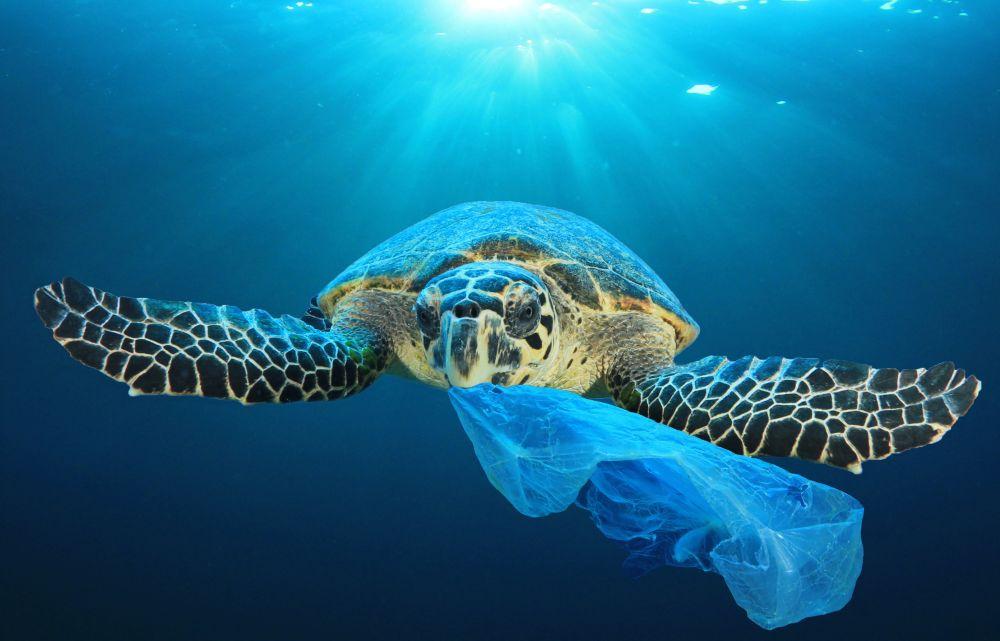 Más de la mitad de las tortugas en el mundo ingirieron plástico