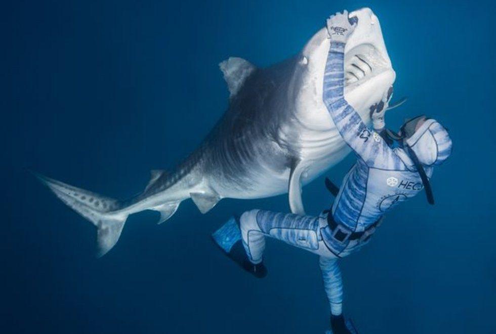 Hombre logra calmar a tiburón gigante con tan solo un toque de su mano (VIDEO)