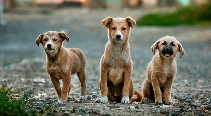 Estas son las 5 razas de perros favoritas de los mexicanos