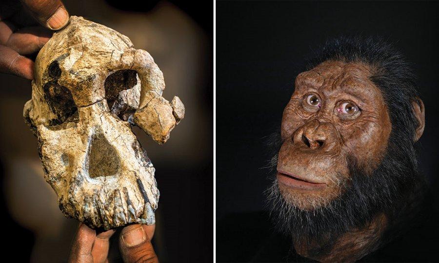 Hallan cráneo de 3.8 millones de años de antigüedad