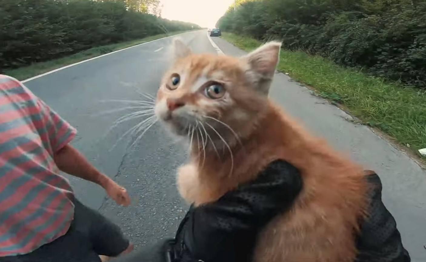 Dos héroes arriesgan todo para rescatar a gatito perdido en la carretera
