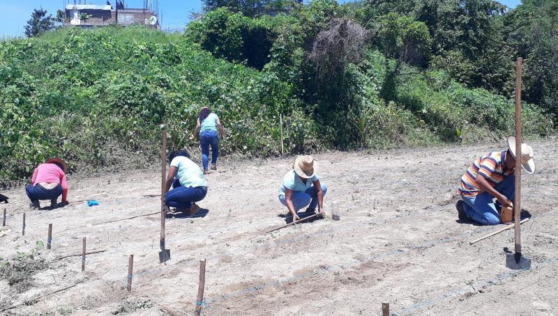 Potencial de la jamaica (Hibiscus sabdariffa L.) en la Costa Chica Oaxaqueña