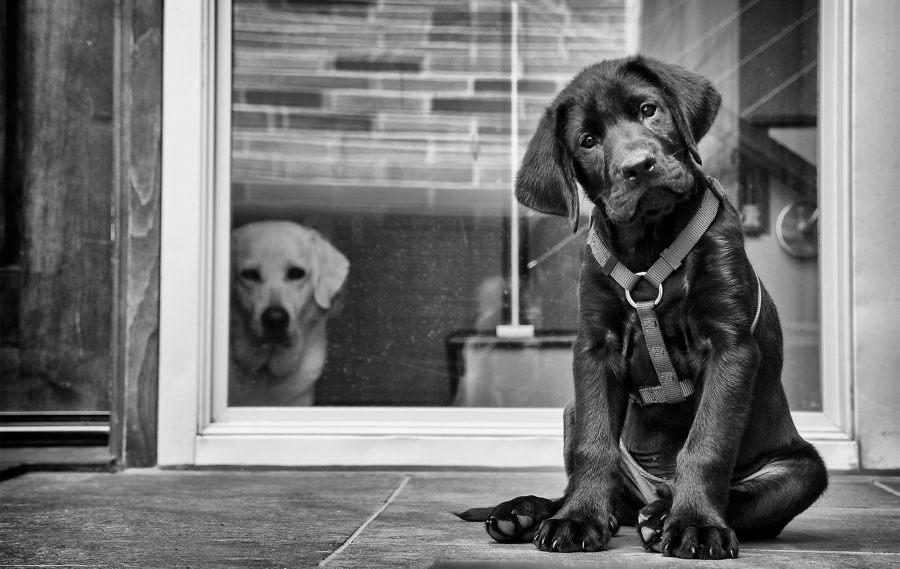 ¿Un perro puede sentir celos?