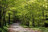 Algunas cualidades que permiten a los bosques producir y proteger