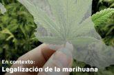 Contribuye el Centro de Estudios Sociales y de Opinión Pública al debate sobre despenalización o legalización de la marihuana