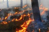 Son declarados 2 municipios de Oaxaca en Emergencia por incendios forestales