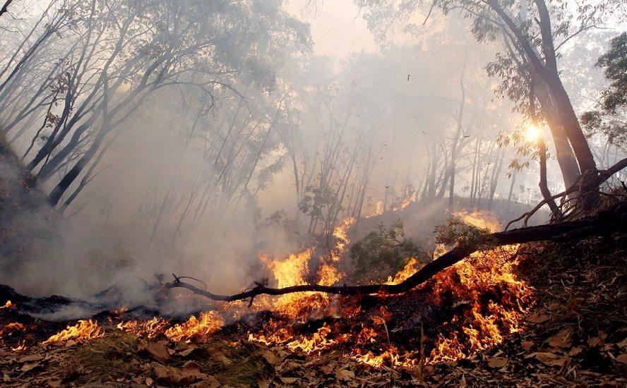 No todos los incendios dañan los ecosistemas: Conafor