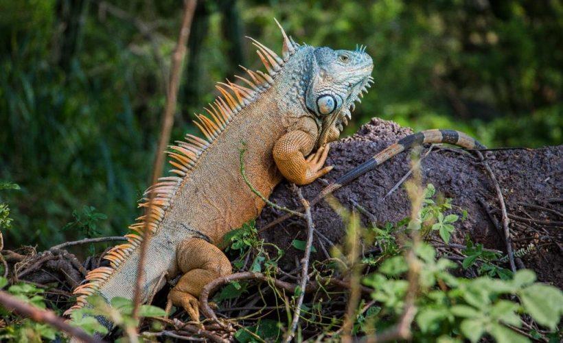 Diversidad biológica, el gran tesoro de Oaxaca: Semaedeso