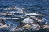 Cientos de delfines se dejan ver en costas de Oaxaca