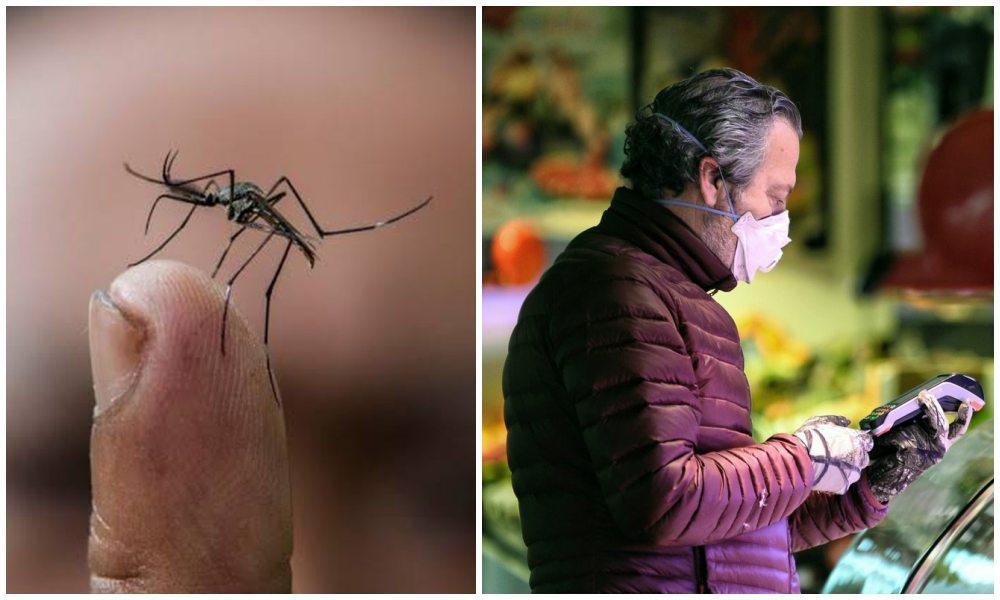 Dengue podría proporcionar cierta inmunidad contra COVID-19: estudio