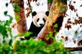 La ciencia urge a doblegar la curva de la alarmante pérdida de biodiversidad