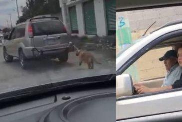 Exhiben a pareja que ata a un perro a camioneta y lo