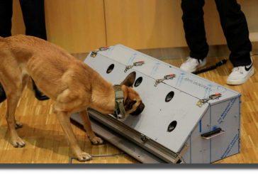 Perros entrenados detectan covid-19 con 94% de precisión
