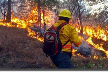 Declaran a cinco municipios en emergencia por incendios en Oaxaca