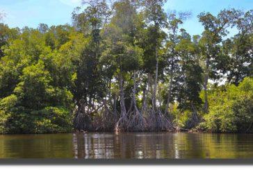 Se fortalecen estrategias en protección de los humedales costeros de Oaxaca y su biodiversidad