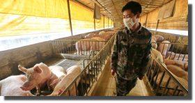 COVID-19 se originó probablemente en una granja en China: experto de la OMS