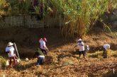 Refuerza Ayuntamiento de Oaxaca de Juárez acciones preventivas en ríos y arroyos de la ciudad