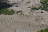 Devastarán hábitat de tortugas en Chacahua, Oaxaca