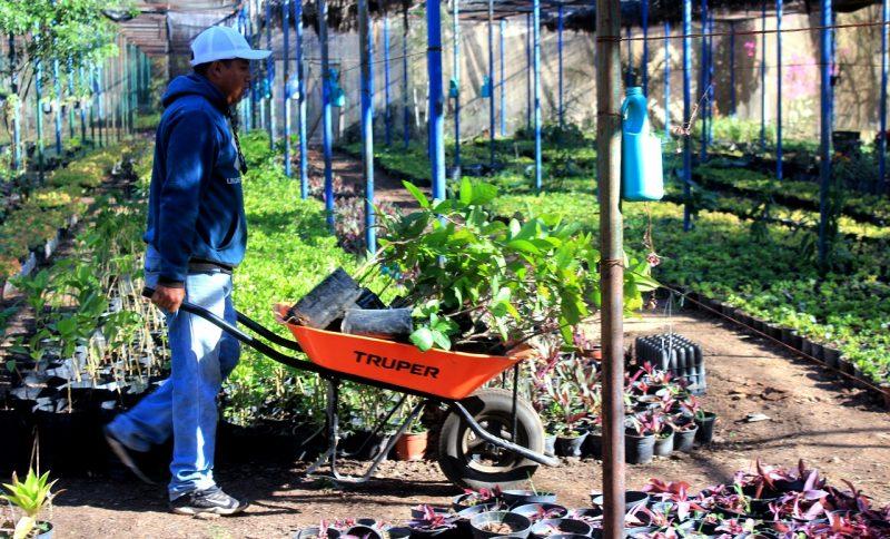 Vivero Municipal, el más importante proveedor de arbolado urbano para Oaxaca de Juárez