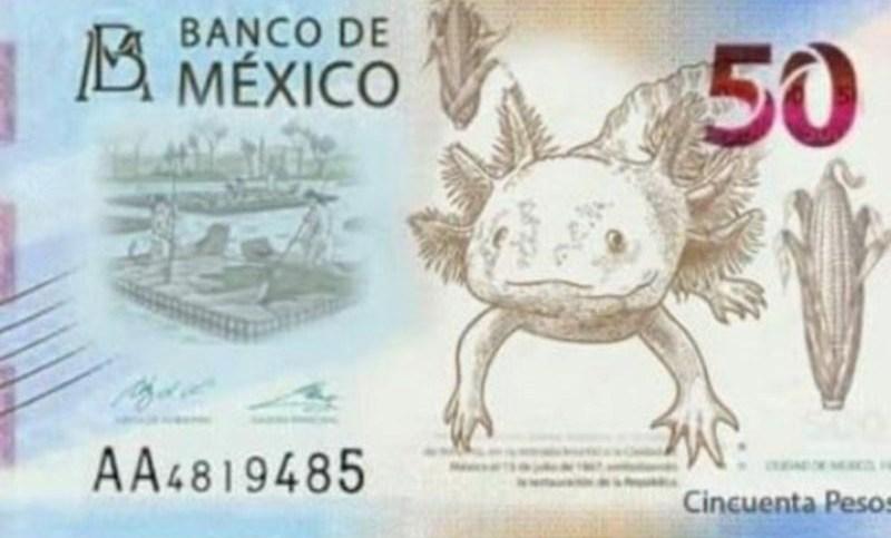 El axolote será la nueva imagen del billete de 50 pesos