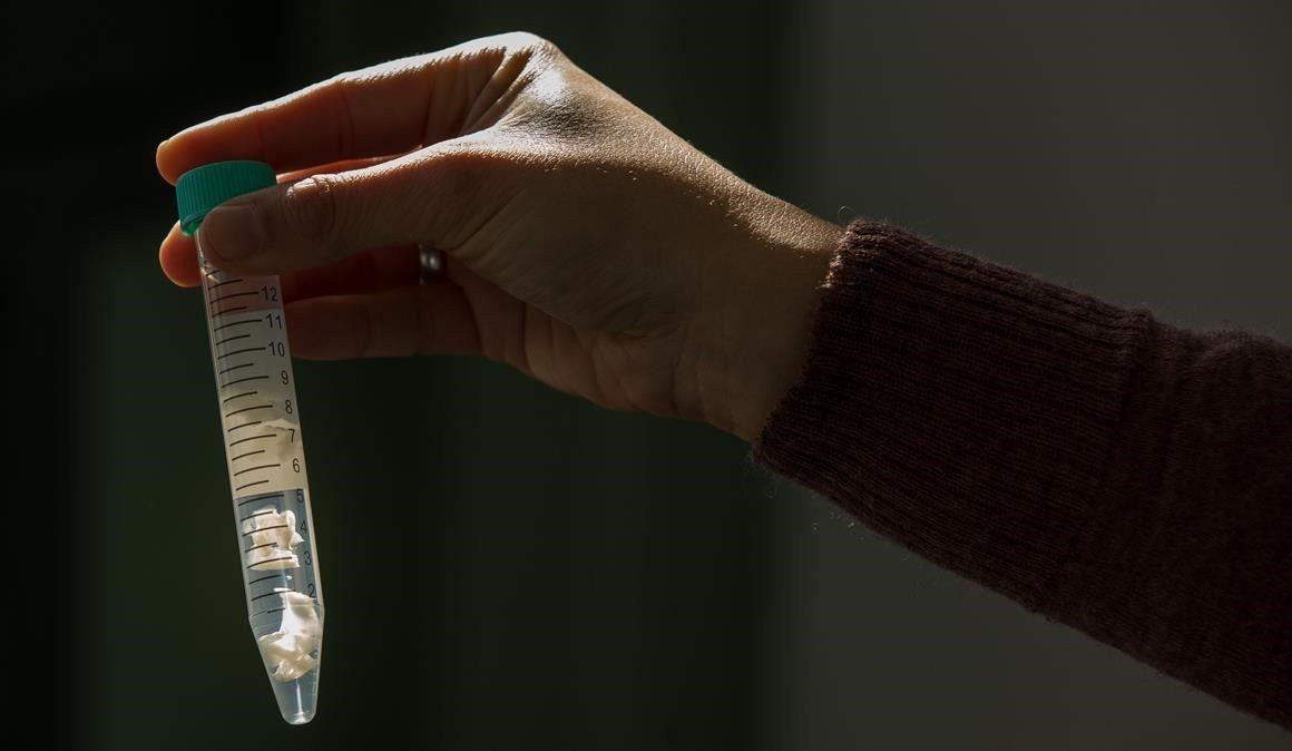 Cofepris alerta por terapias fraudulentas con «células madre» para curar la Covid-19