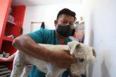 DIF Xoxocotlán brinda servicios para abatir sobrepoblación canina y felina