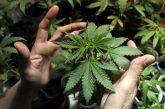 Estudio demuestra que el cannabis reduce múltiples síntomas del Parkinson