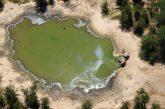 Bacteria en el agua causa la muerte de más de 300 elefantes en Botsuana