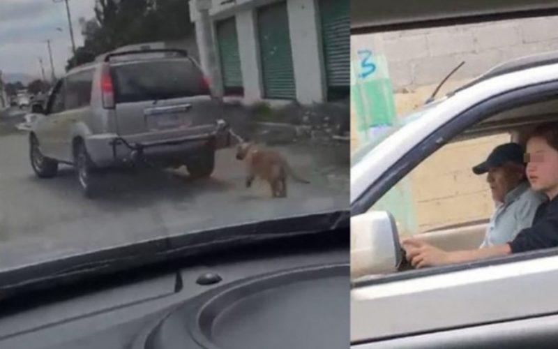Exhiben a pareja que ata a un perro a camioneta y lo «pasea»