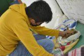 El 26 de noviembre concluyen jornadas de esterilización animal del Ayuntamiento de Oaxaca