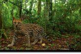 Que la década que inicia no sea otra pérdida para la biodiversidad en el planeta: WWF