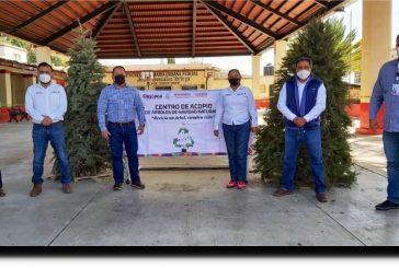 Recibe respuesta favorable de la sociedad oaxaqueña el acopio de árboles de navidad naturales