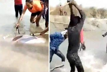Arrestan a tres personas en la India por matar a golpes a delfín en peligro de extinción