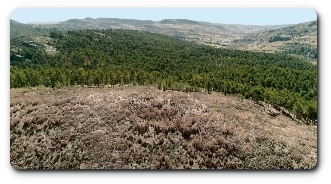 En 13 años se han deforestado 43 millones de hectáreas en el mundo