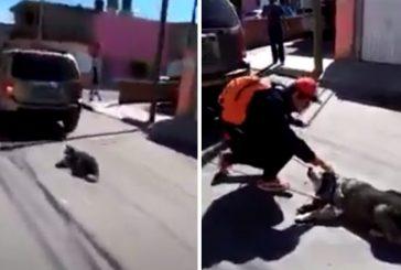 Video: Mujer arrastra a un perrito que estaba amarrado a su camioneta